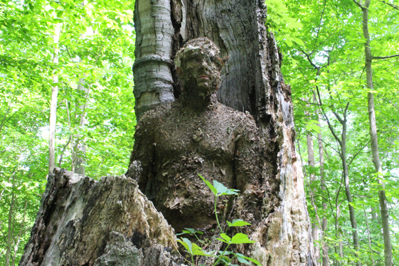 creek-stewart-nat-camo-hollo9w-tree